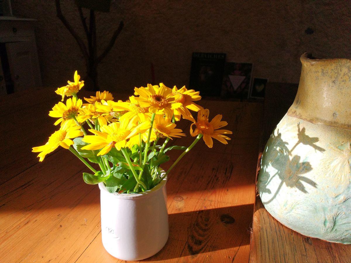 Chrysanthème symbole du soleil et de la lumière au Japon