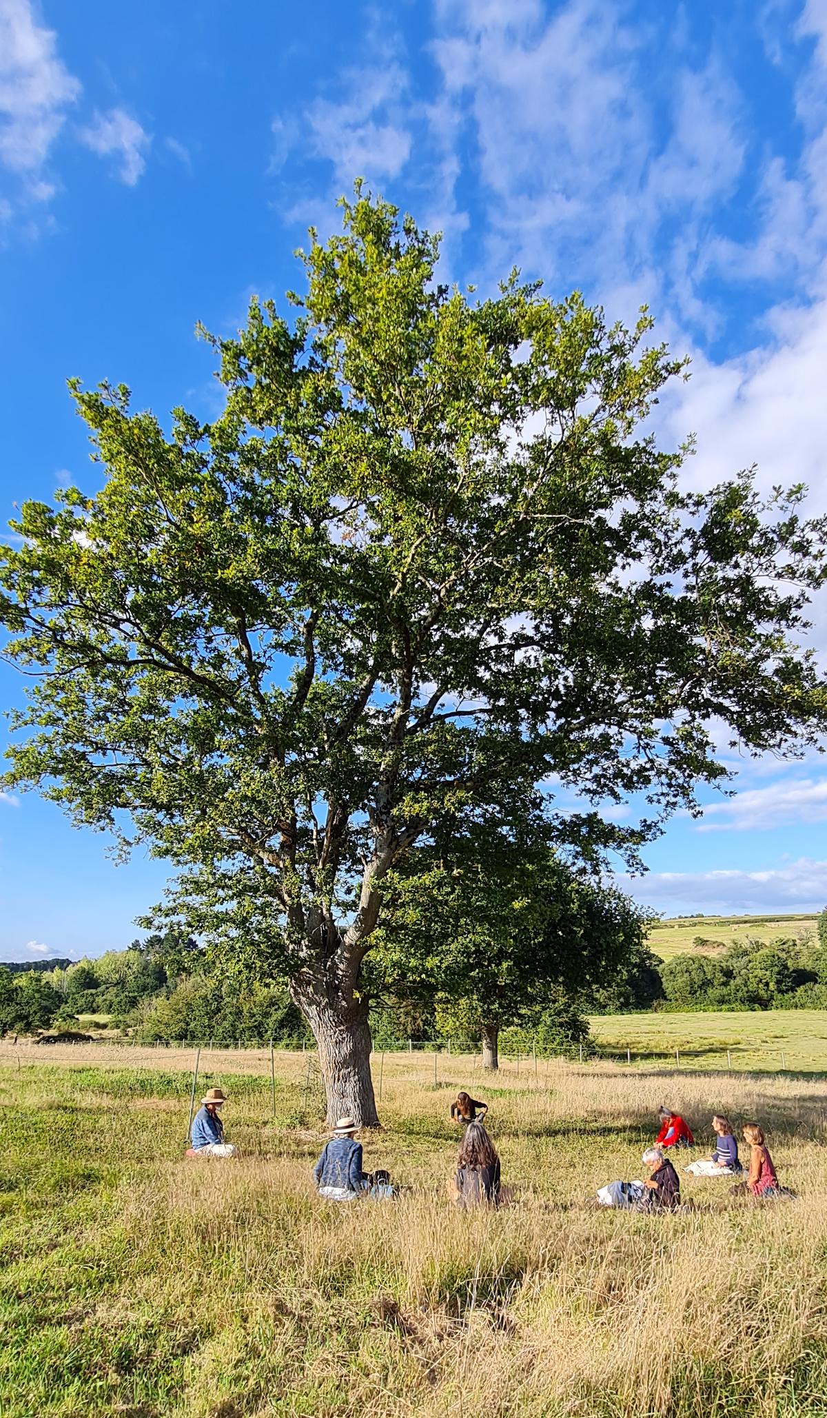 Méditation FFY près d'un chêne