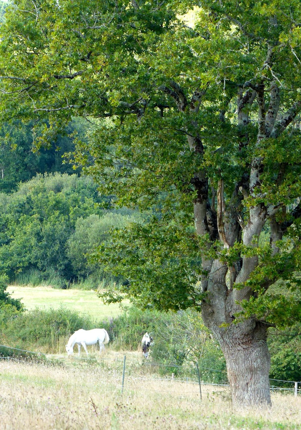 Partage autour d'un chêne